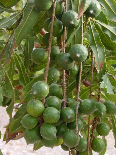 Macadamia Natural Oil Set